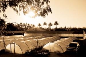 All Season Nursery at Sunset Photo
