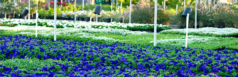 Flower Bed at the Nursery